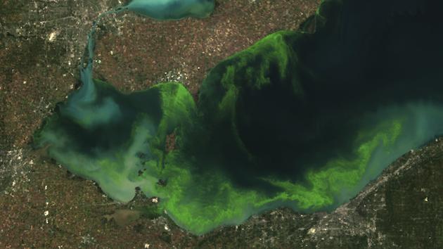 The Toxic Algae Are Not Done With Toledo. Not By A Long