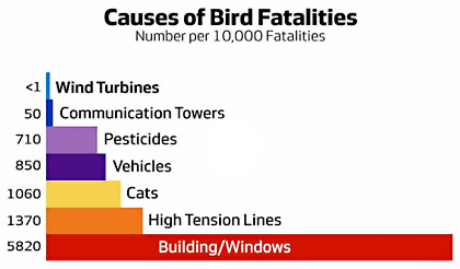 chart of what kills birds