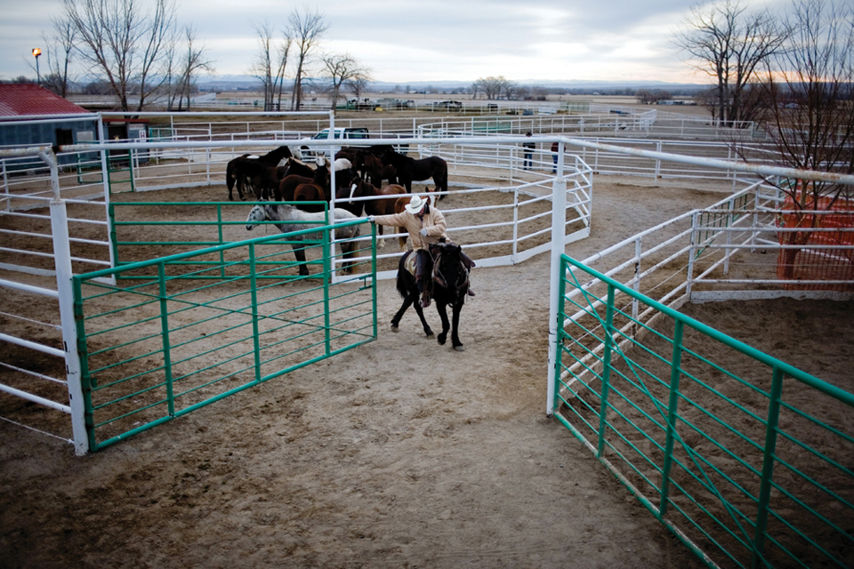 wild horses essay Wild horses 2,476 likes 6 talking about this as well as researching and looking back on the short career of wild horses this page will also bring you.