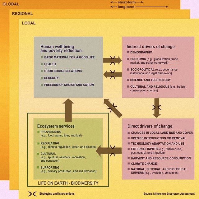 relationship between biodiversity and ecosystem services