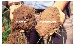 Food and extreme weather it 39 s the soil stupid mother jones for Mineral soil vs organic soil