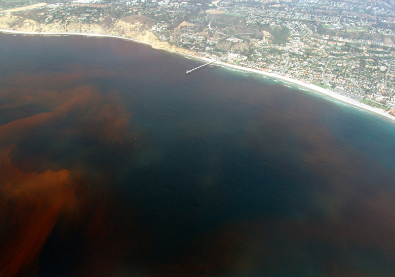 La-Jolla-Red-Tide.780.jpg