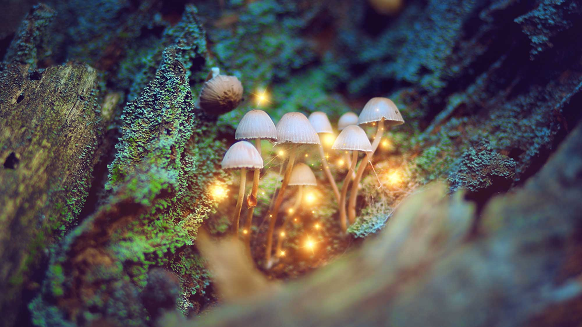 'Magic Mushroom' Drug Shows Promise in Treating Addictions and Cancer Anxiety