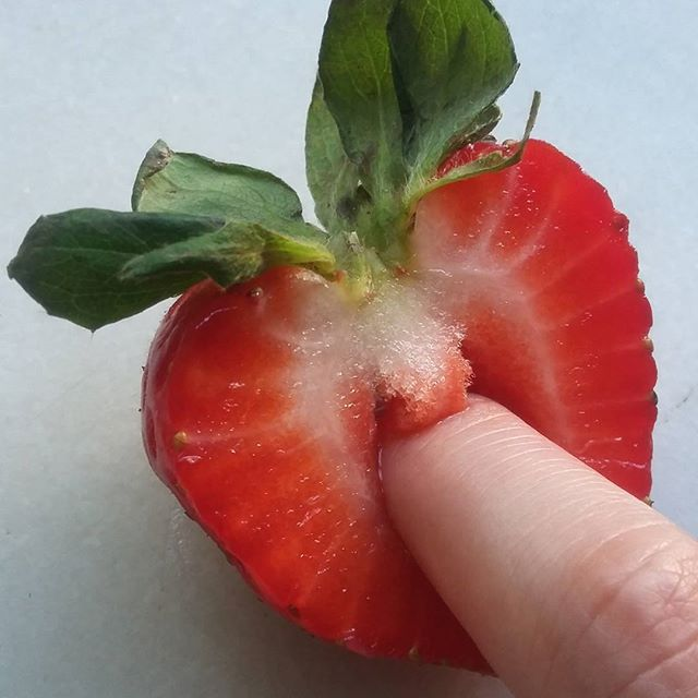 Fruit of sex