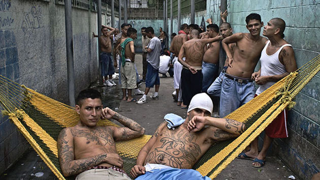 preventing violent crime stopping gang membership essay Gang violence speech save your essays here so you gangs and more than a half a million gang members this shows how much gang violence and gang activity.