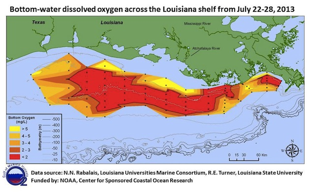 why this years gulf dead zone is twice as big as last years