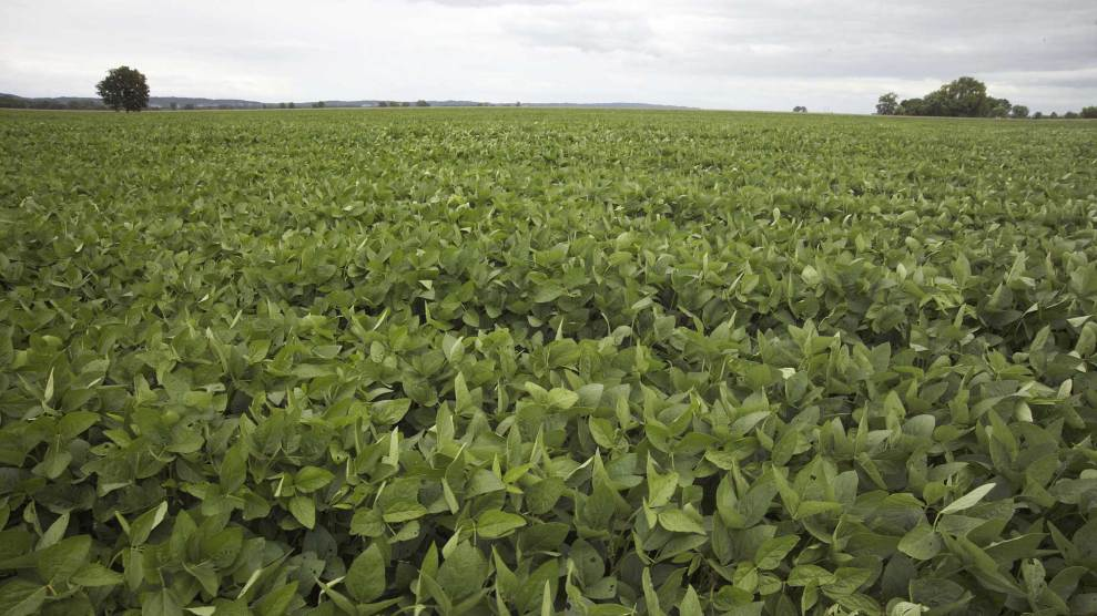 farmers say this weedkiller is also killing their soybean plants