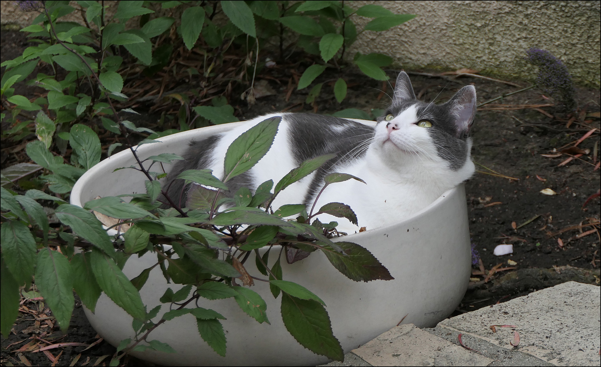 Hmmm If You Plant A Cat In A Pot, Will You Grow More Cats? We're Going To  Find Out! I'll Have The Surprising Answer Next Week
