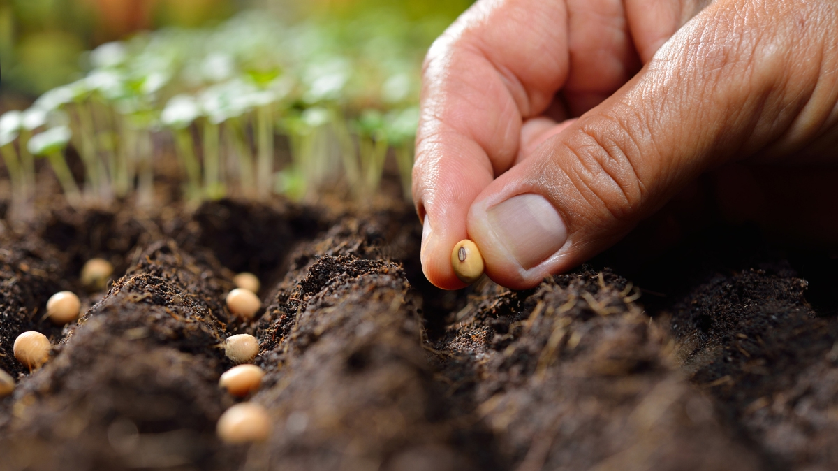 29 states just banned laws about seeds