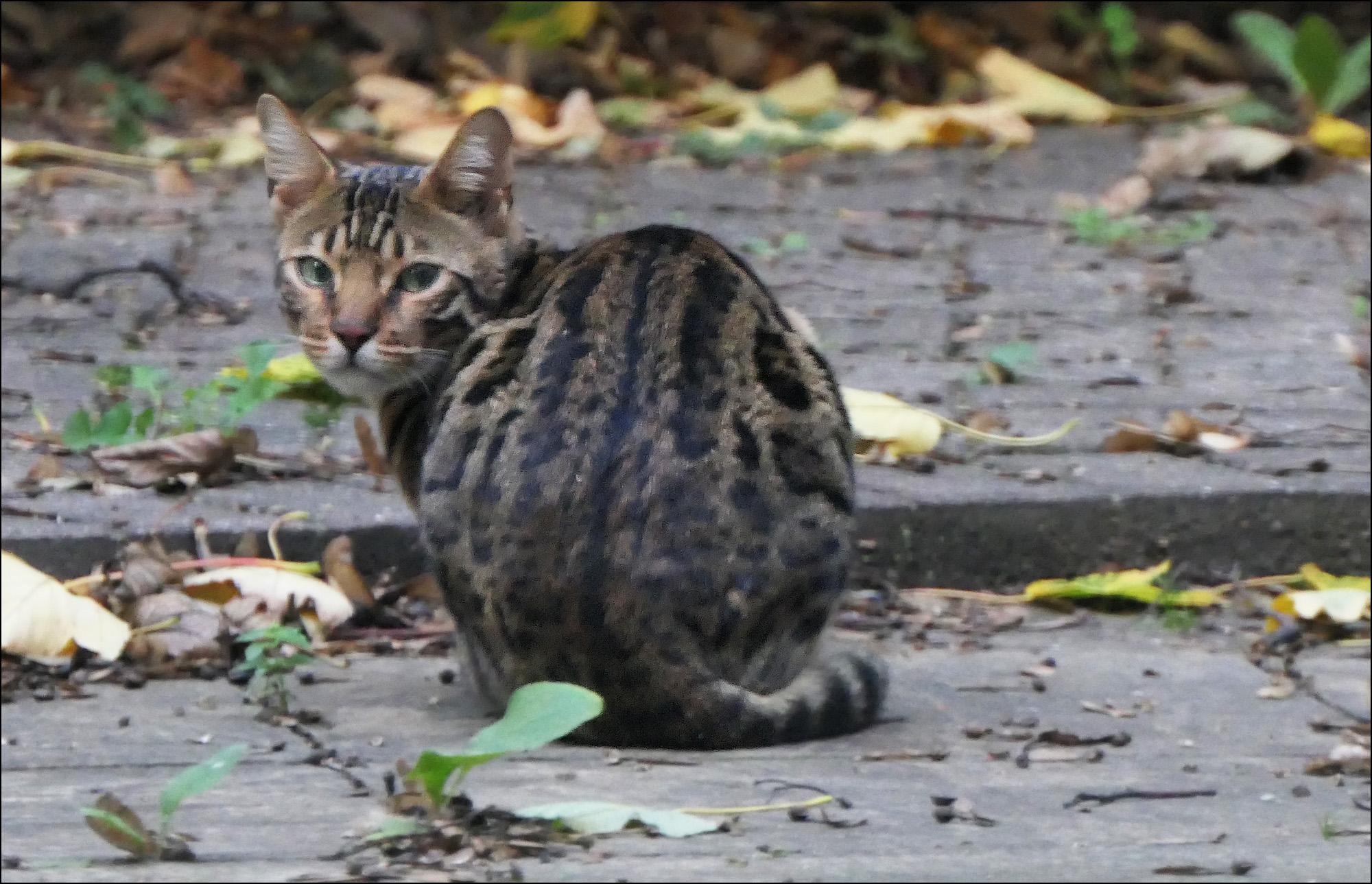 friday super cat blogging u2013 20 october 2017 u2013 mother jones