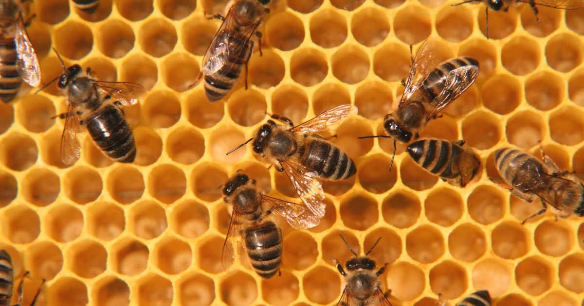 Scientists found a gnarly pesticide in 75 percent of global honey samples