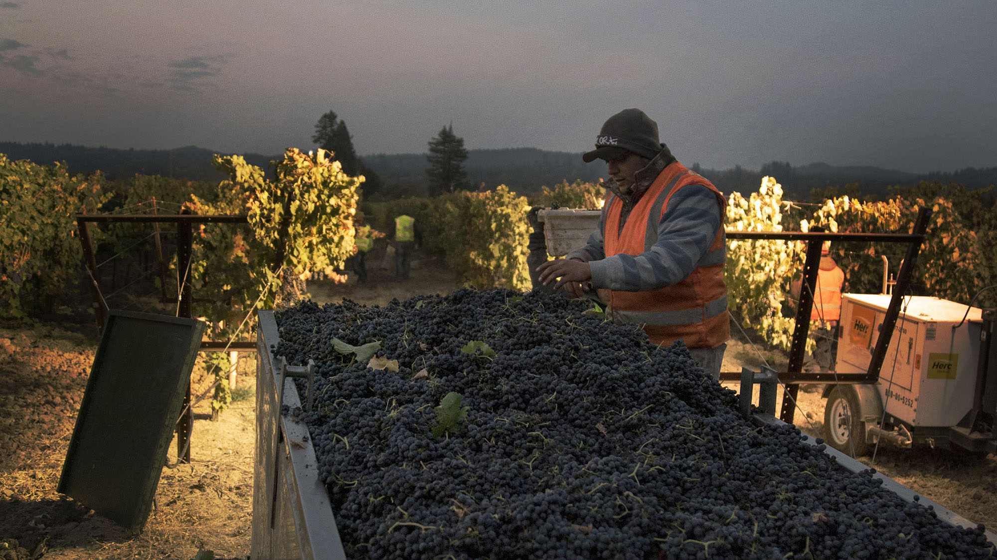 California's Vineyard Workers Already Faced Long Hours, Low