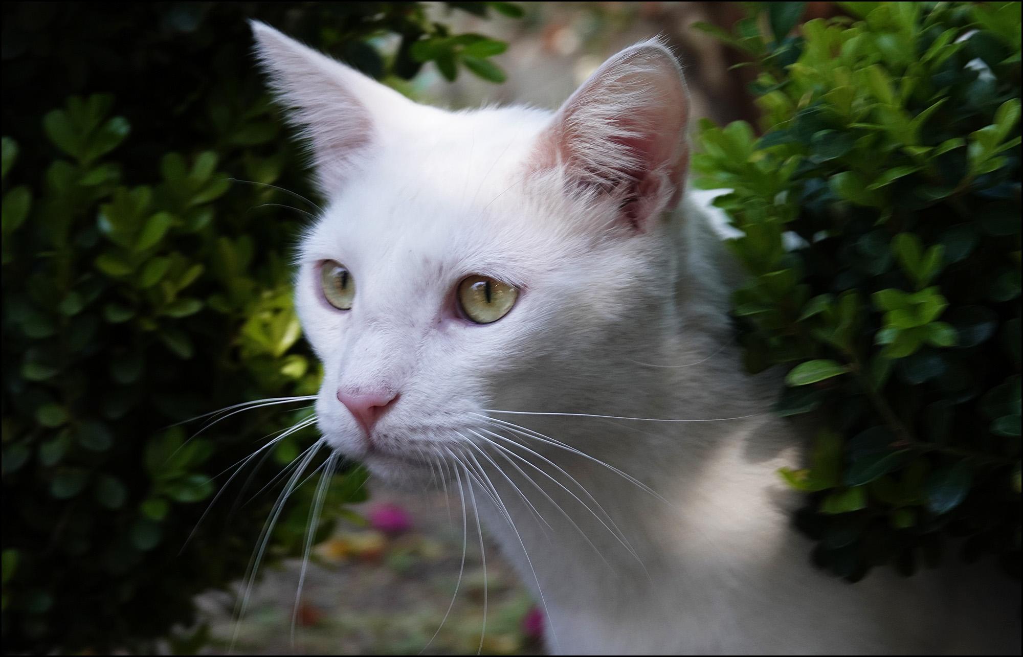 Friday Cat Blogging – 1 June 2018