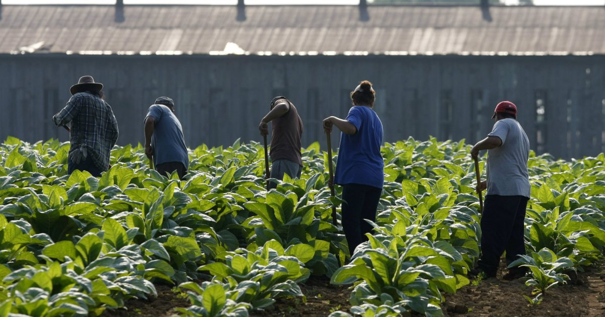 Farmworkers Are Dying from Extreme Heat