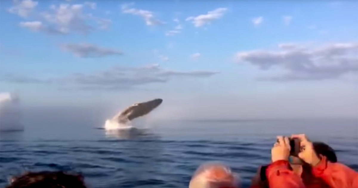 """photo image This Exhilarating Video of a Rare """"Triple Whale Breach"""" Is a Real Nice Break from Everything"""