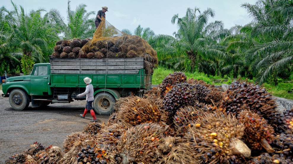 Göttinger Weihnachtskalender.We Need To Talk About Palm Oil Mother Jones