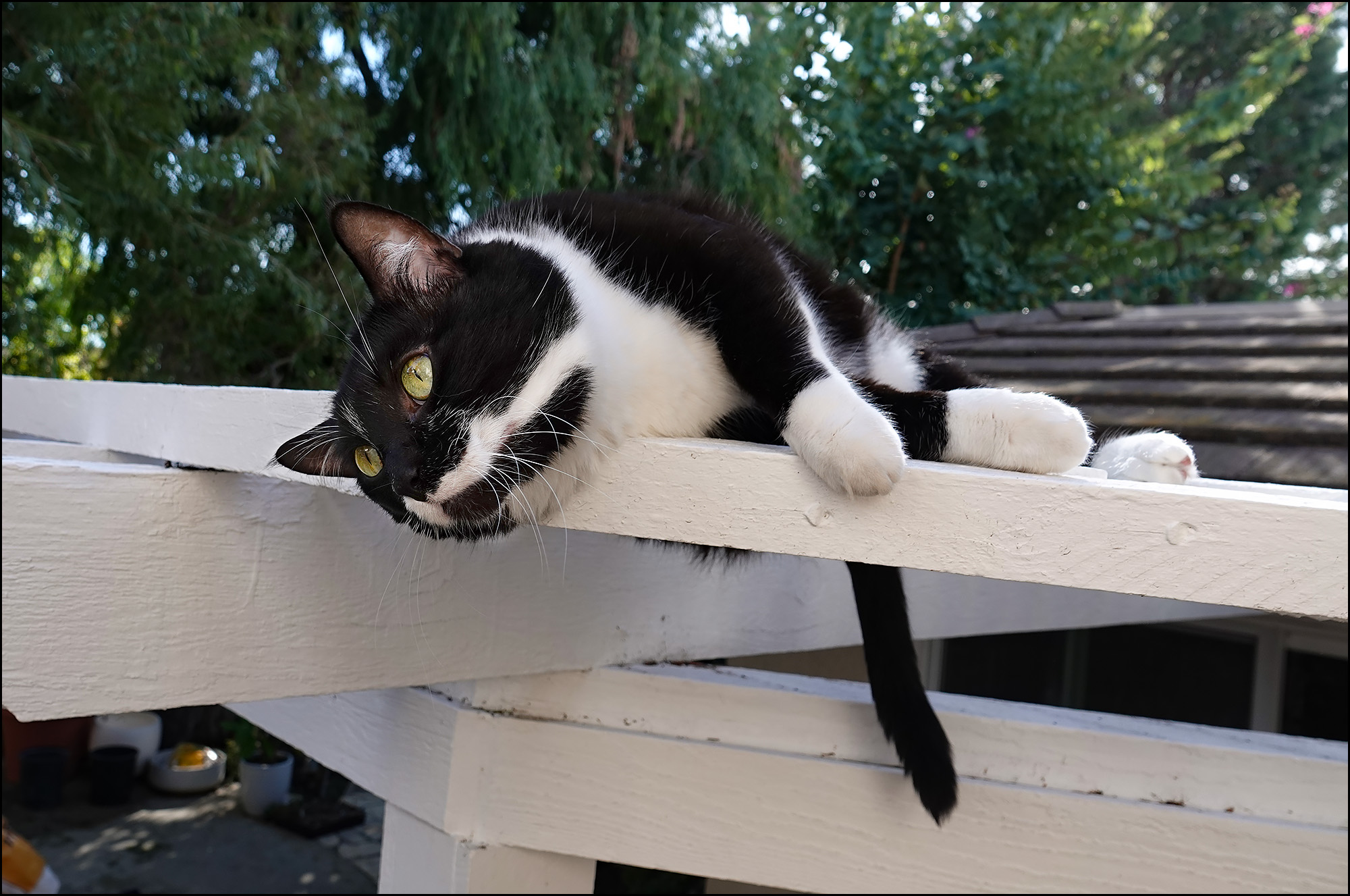 Friday Cat Blogging – 22 February 2019