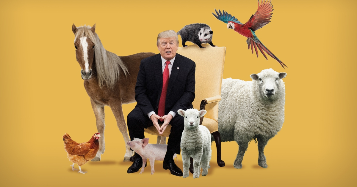 Any Mother Sheep? Trump Donald Why Own Doesn't – Jones