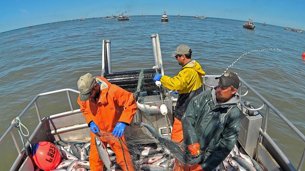 fish header