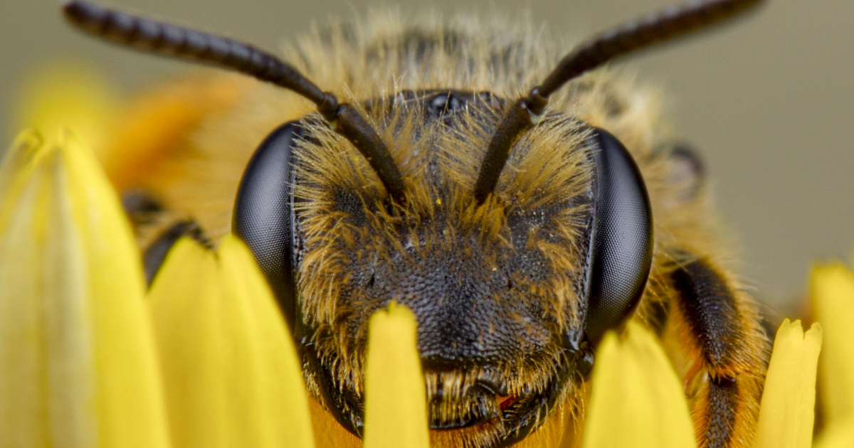 A Big New Study Finds Bee-Killing Pesticides Aren't Even Worth it for Soybean Farmers