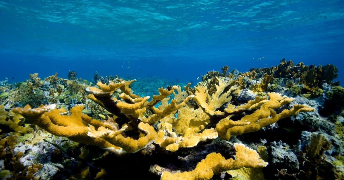 What Did Hurricane Dorian Do to the Bahamas' Coral Reefs?