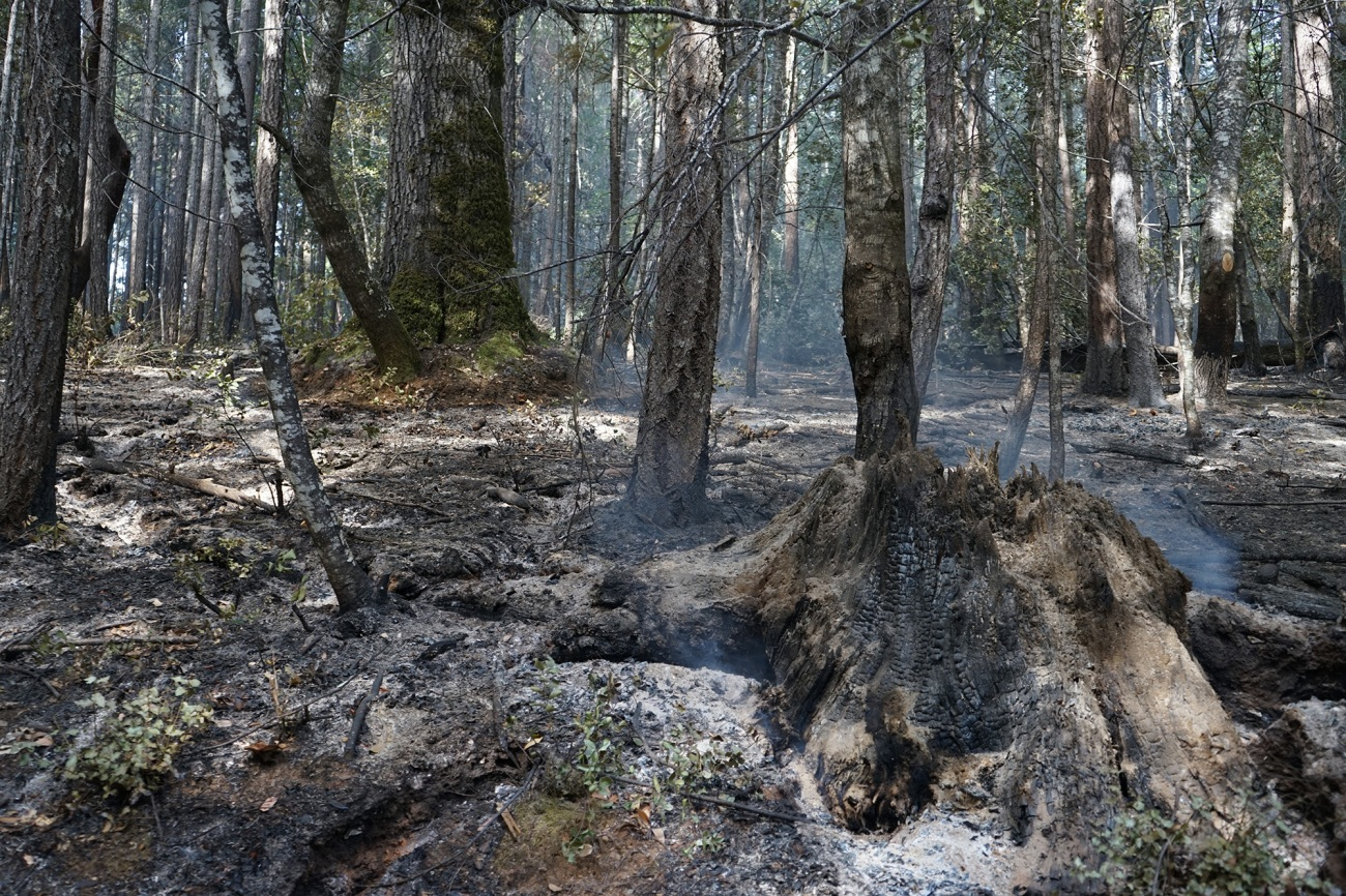 A stump smolders in a forest that looks charred but spacious after a controlled burn.