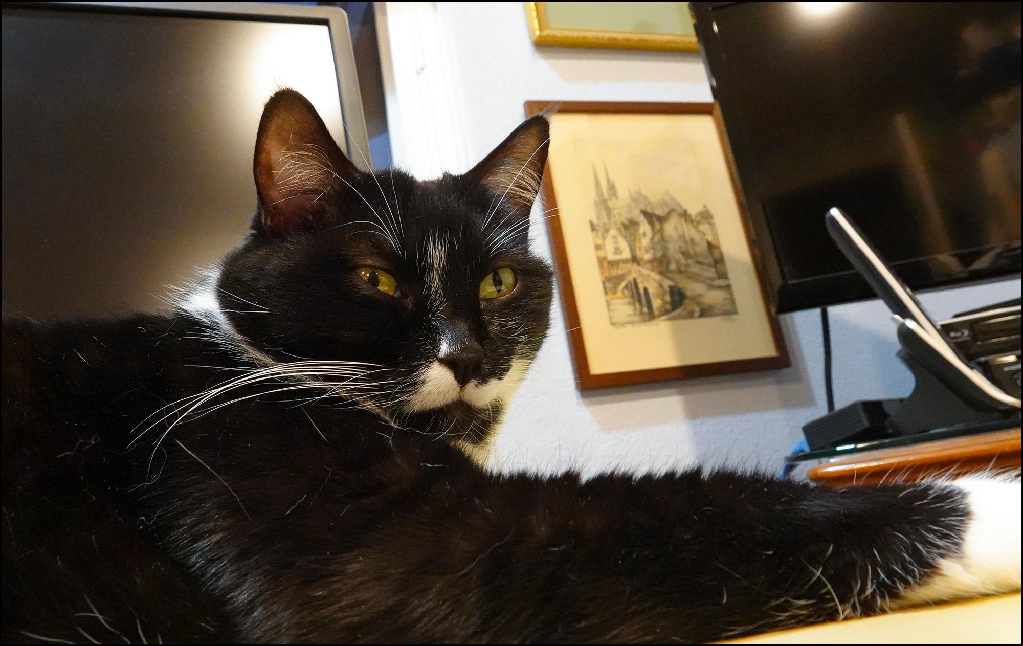 Friday Cat Blogging – 16 October 2020 1