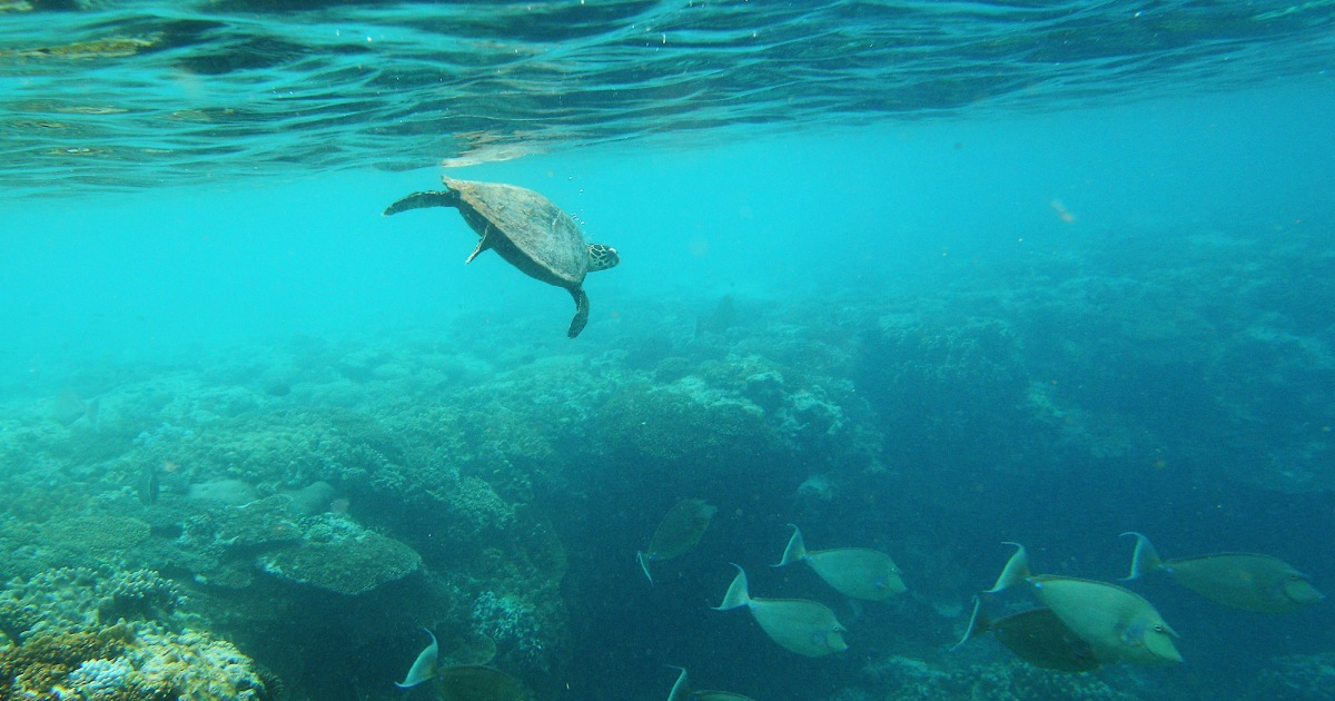 This geoengineering trick could maybe save the Great Barrier Reef