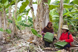 In addition to verified carbon emissions reductions, 'For Peat's Sake' also supports alternative livelihoods for local residents, providing microfinance loans to help small businesses thrive.