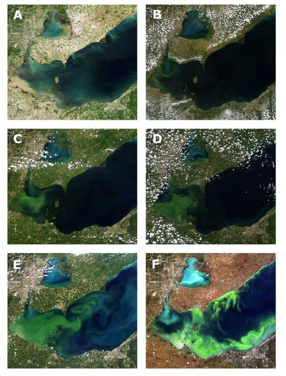 satelite view of algae getting worse over time