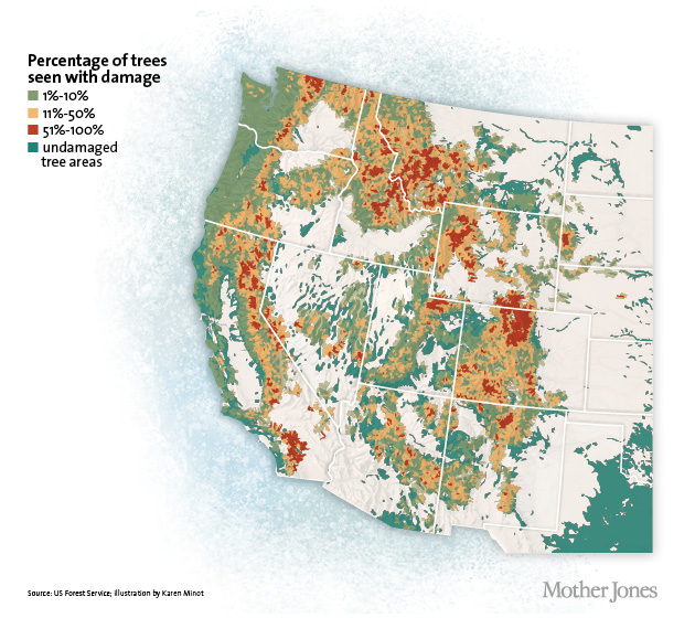 Bark Beetles Are Decimating Our Forests That Might Actually Be A - Us forest map 1800s