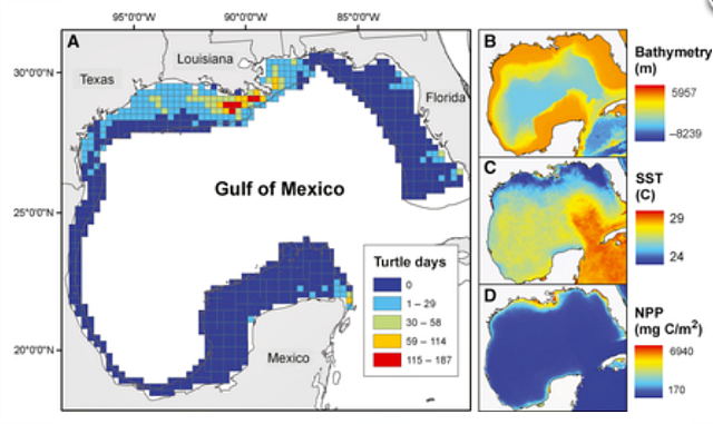 Foraging habitat by Kemp's ridley turtles in the Gulf of Mexico: