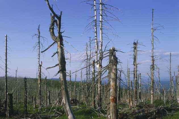 acid rain has a major affect Acid rain has many ecological effects the harmful effects of acid rain are much greater vehicles are also major fossil fuel users.