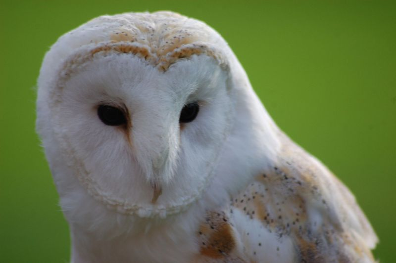 harry potter s owl problem mother jones