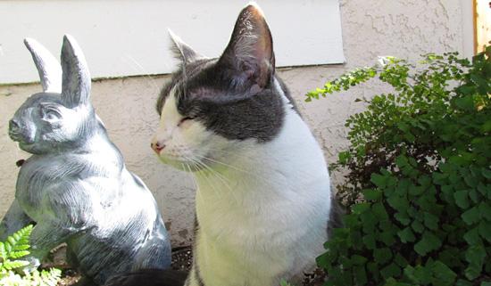 Friday Cat Blogging 28 October 2016 Mother Jones
