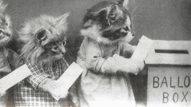 Image result for images of cats voting