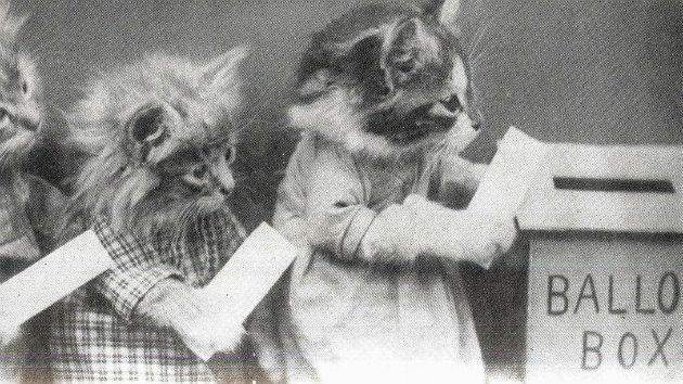 Dead Cat Gets Voter Registration Application