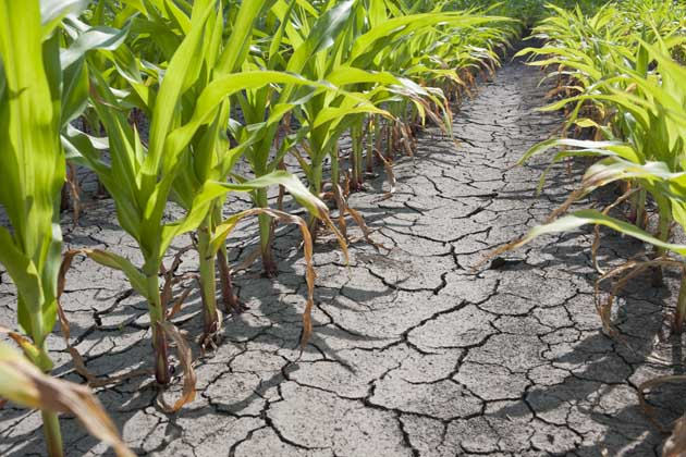 Our Dangerous Mix of Climate Change and Resource Scarcity