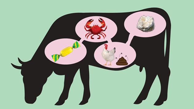 5 Surprising Things We Feed Cows Mother Jones