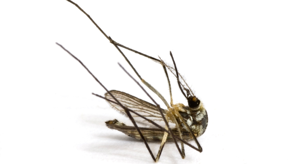 How Mosquito In Gets Rid Of Mosquitoes