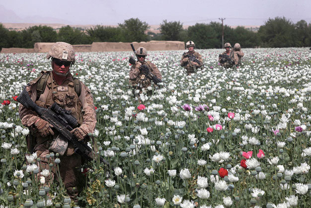 who are US troops guarding poppy fields for?