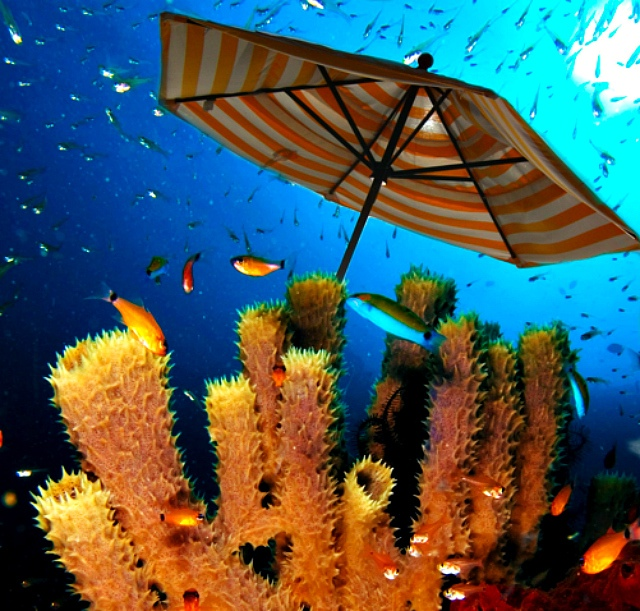 Coral reef image: Nick Hobgood via Wikimedia Commons; beach umbrella: Loren Sztajer via Flickr