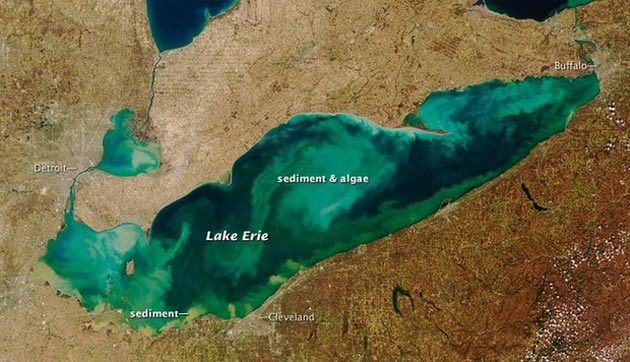 Lake Erie slime