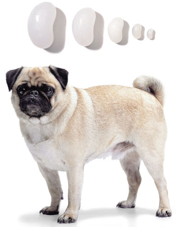 Donate A Testicle For Money >> Exhibit: Neutered Pet Tricks – Mother Jones