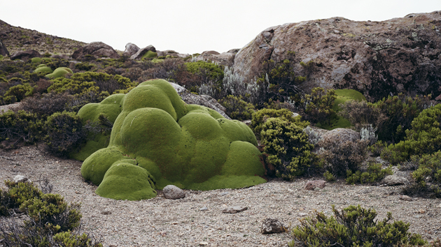 6 Photos Of The Oldest Living Things In The World Mother Jones
