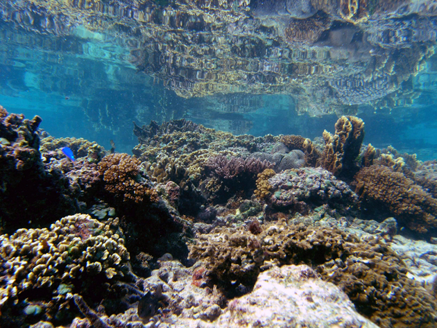 Coral Fights Back Against Warming Seas Mother Jones