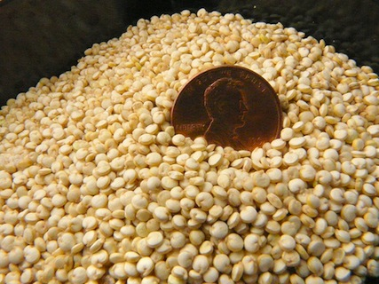 Quinoa in poop