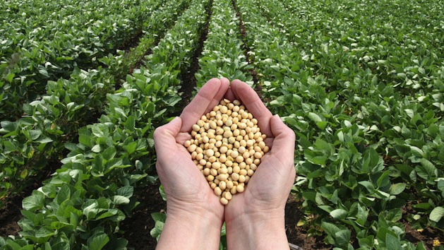 Image result for Soybeans, american farmers, photos