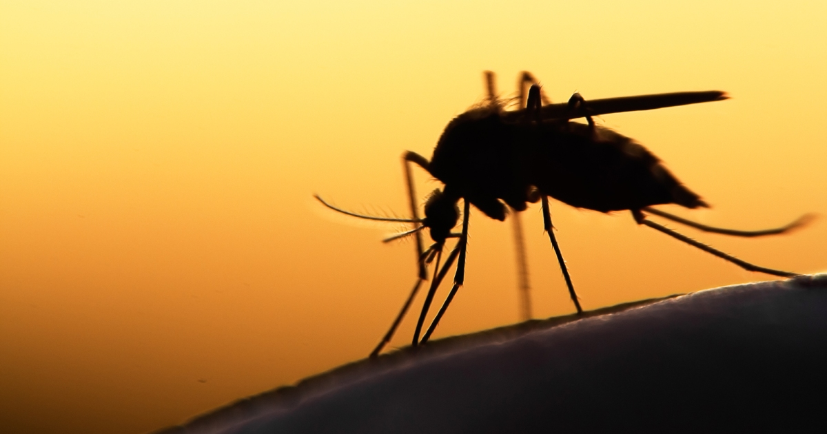 How Global Warming Is Making Some Diseases Even Scarier
