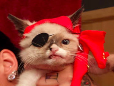 Sir Stuffington pirate cat
